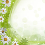 Floral background. Daisies on a green background with bokeh and stars Stock Photos