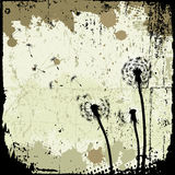 Floral background, dandelion Royalty Free Stock Image