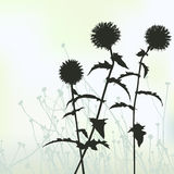 Floral background, dandelion Royalty Free Stock Images