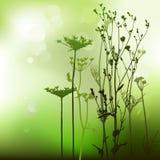Floral background, dandelion Stock Image