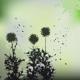Floral background, dandelion Stock Photo
