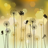 Floral background with dandelion Stock Image