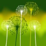 Floral background, dandelion Stock Images