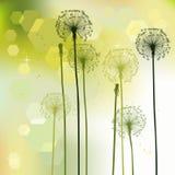 Floral background, dandelion Royalty Free Stock Image