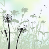 Floral background, dandelion. 2d vector. Meadow during summertime Royalty Free Stock Image