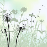 Floral background, dandelion meadow diuring summertime Royalty Free Stock Photography