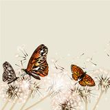 Floral background with dandelions and butterflies for design Royalty Free Stock Photo