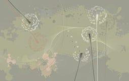 Floral background, dandelions - desktop wallpaper Stock Images