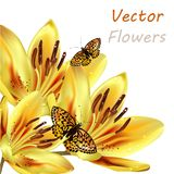 Floral background with detailed vector lily and butterflies Stock Images