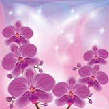 Floral background with exotic flowers orchids Stock Image