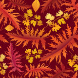Floral background.  fall wallpaper. Royalty Free Stock Image