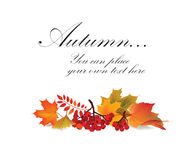 Floral background. Fall wallpaper. Stock Image