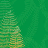 Floral Background with Fern Fronds Stock Images