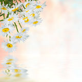 Floral background 24 Royalty Free Stock Photos