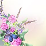 Floral background with field flowers clover and butterfly Stock Photography