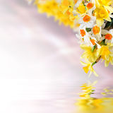 Floral background 15 Stock Photo