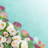 Floral background 08 Stock Photos