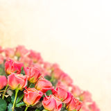 Floral background 16 Stock Image