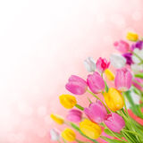 Floral background 07 Stock Photo