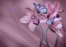 Floral background. Of orchids, bright flowers on a gray. Applied a filter with grain Stock Images