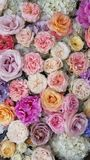 Floral background. Pink flowers. Floral carpet. Floral pattern. white roses. Floral background. Flowers of different colors. Floral carpet. Floral pattern royalty free stock photos