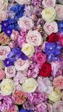 Floral background. Pink flowers. Floral carpet. Floral pattern. white roses. Floral background. Flowers of different colors. Floral carpet. Floral pattern stock images