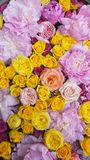 Floral background. Pink and yellow flowers. Floral carpet. Floral pattern. white roses. Floral background. Flowers of different colors. Floral carpet. Floral royalty free stock photography
