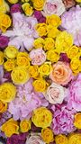Floral background. Pink and yellow flowers. Floral carpet. Floral pattern. white roses. Floral background. Flowers of different colors. Floral carpet. Floral stock photography