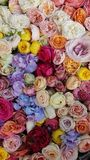 Floral background. Different colors flowers. Floral carpet. Floral pattern. white roses. Floral background. Flowers of different colors. Floral carpet. Floral stock photo