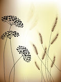 Floral background - Flowers & Grain ears Royalty Free Stock Images