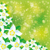 Floral background. Flowers on green background Stock Photos