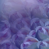 Floral background. Flowers  on purple background.  Light-blue  flowers roses.  Floral collage.  Flower composition. Stock Photo