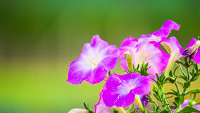 Floral background. Flowers purple green background band beautiful Stock Photos