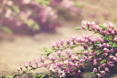 Floral Background with Flowers and Summer Light Stock Image