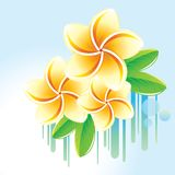 Floral background with frangipani. Stock Photo
