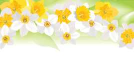Floral background. gentle flower border. Stock Photos