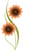 Floral background with gerbera. Stock Photos