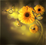 Floral background, gerbery in the rays of light Stock Images