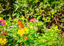 Floral background, gerbery in the rays of light and butterfly. General illustration royalty free stock photo