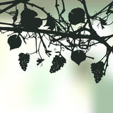 Floral background with a grapes. A space for a text Royalty Free Stock Photography