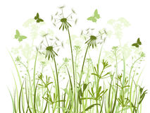 Floral background with  grass and dandelions Royalty Free Stock Image