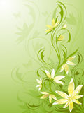 Floral background green Royalty Free Stock Photo