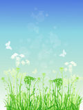 Floral background with green grass Stock Photos