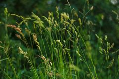 Grenn grass meadow royalty free stock photo