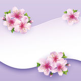 Floral background, greeting card with flower sakur Stock Images