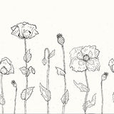 Floral background. Hand drawn Poppies Stock Photography