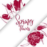 Sketch linear tulips blossom. Stock Image
