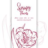 Sketch linear tulips blossom. Stock Photography
