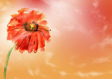Floral background with hand painted Royalty Free Stock Photo