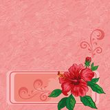 Floral background, hibiscus and contours Royalty Free Stock Photography
